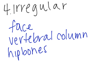 Arrangement And Functions Of Bones